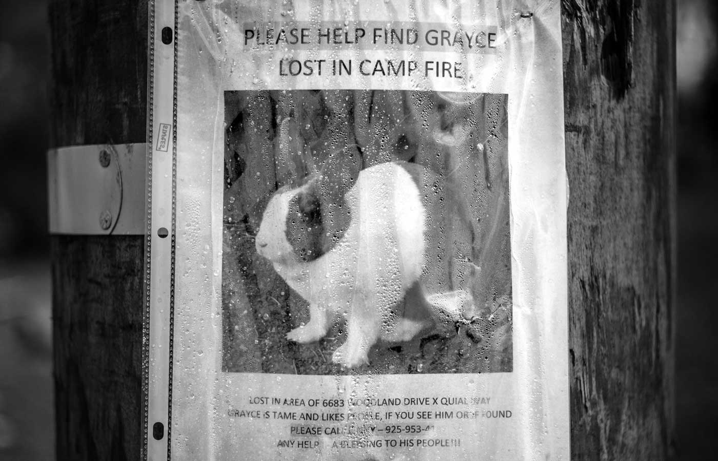 Bunny Lost in Camp Fire